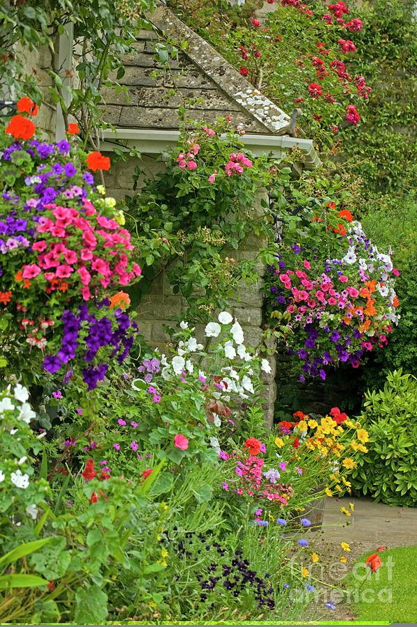 Cottage Garden Photograph - Cottage Garden by Dr Keith Wheeler/science Photo Library