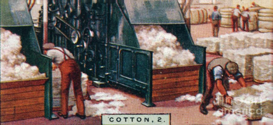 Cotton Drawing by Print Collector