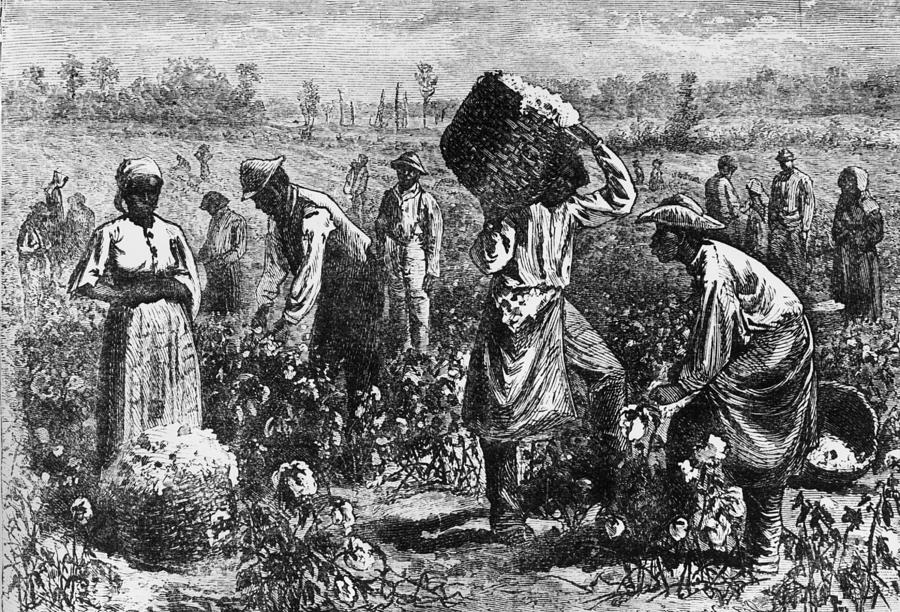 Cotton Slaves Photograph by Hulton Archive