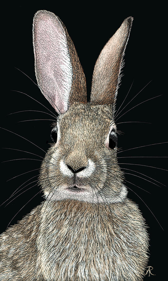 Cottontail by Ann Ranlett