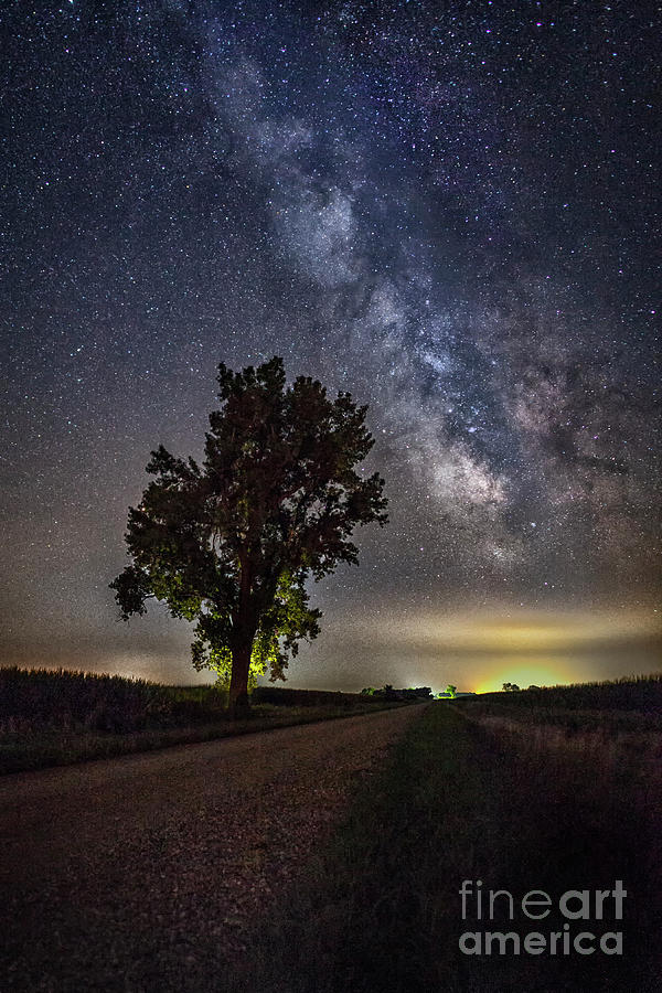 Cottonwood and Milky Way by Michael Greiner