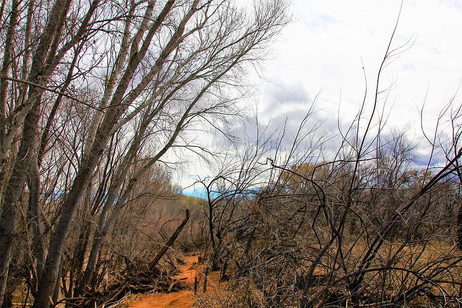 Cottonwood Arizona Jail Trail Trees Path Sky Clouds 5229 Photograph by David Frederick