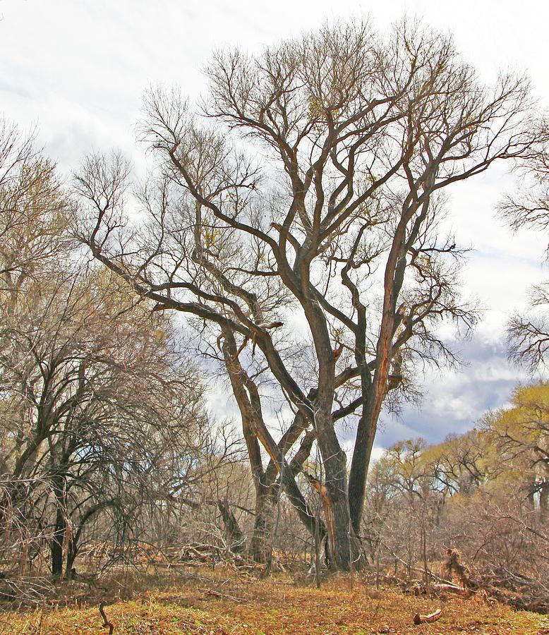 Cottonwood AZ Bayou leafless tree sky clouds path 31262019  by David Frederick