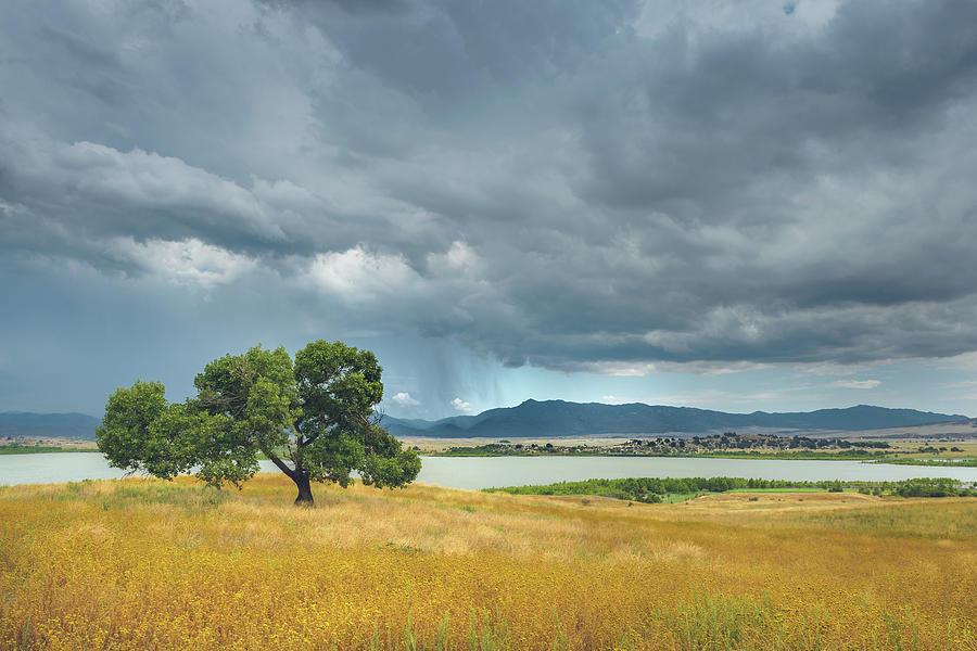 Cottonwood, Tarweed and Monsoon by Alexander Kunz