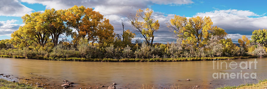 Rio Chama Photograph - Cottonwoods Shining In The Sun Along The Rio Chama In Abiquiu - Rio Arriba County New Mexico by Silvio Ligutti