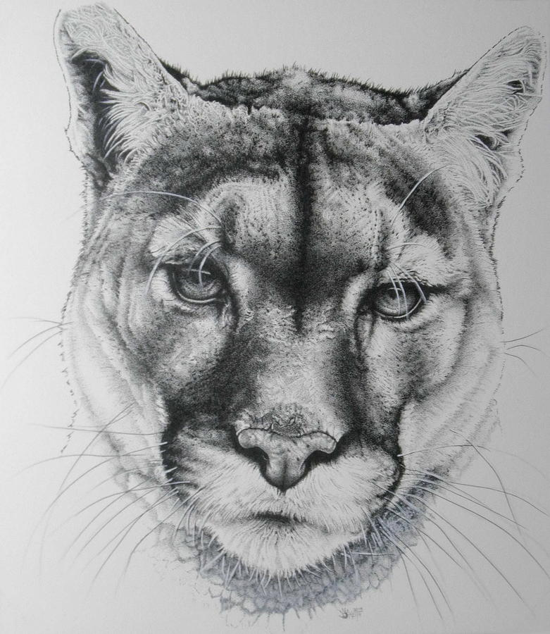 Cougar Complete by Barbara Keith