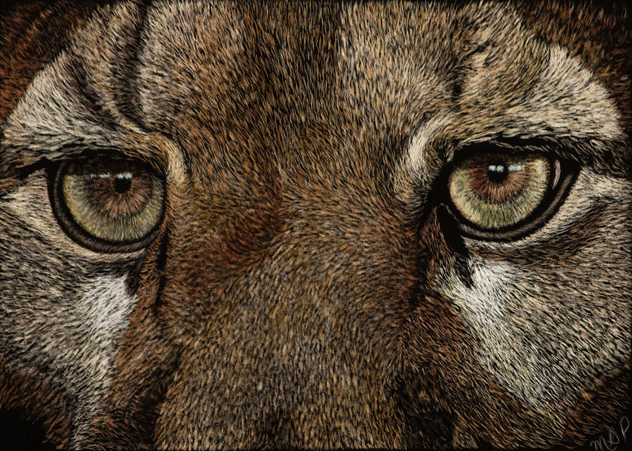 Cougar Eyes by Margaret Sarah Pardy