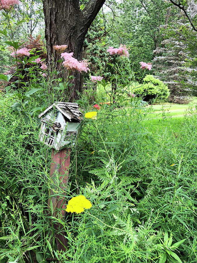 Country Birdhouse by Aimee L Maher ALM GALLERY