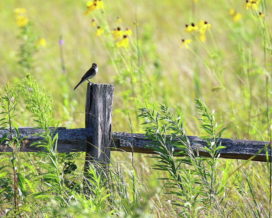 Country Fence by Arvin Miner