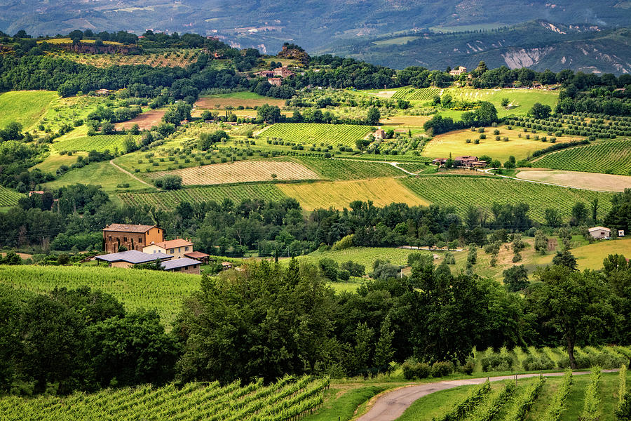 Country Fields in Italy by Carolyn Derstine