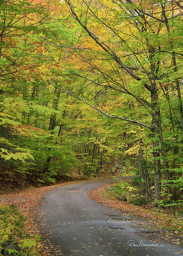 Country Road Albany Nh 9102 Photograph