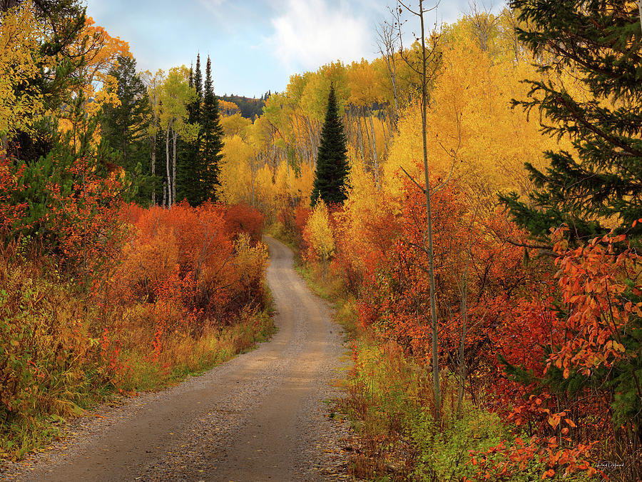 Aspen Forest Photograph - Country Road In Autumn by Leland D Howard