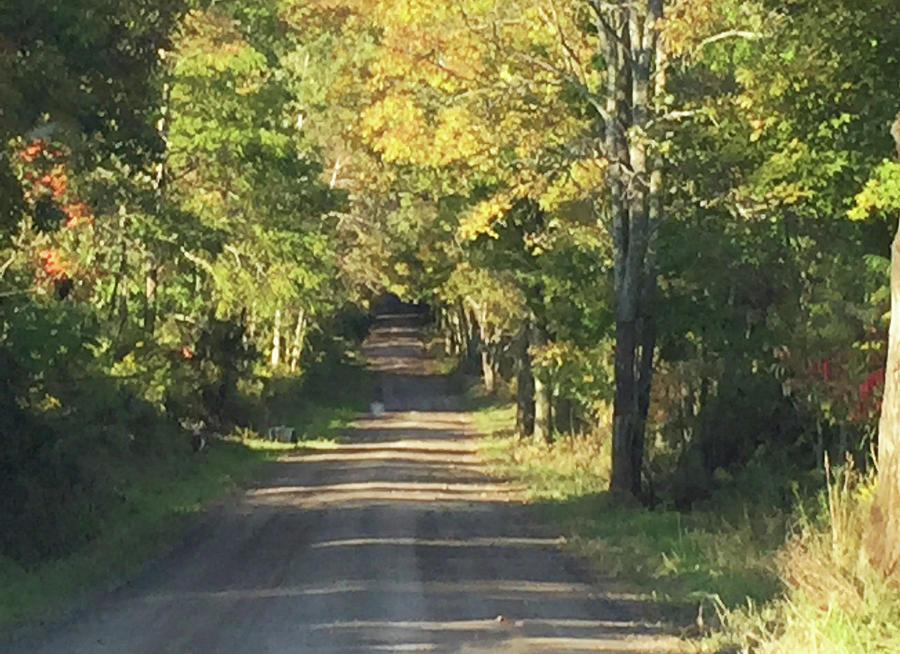 Fall Road by Christine Lathrop