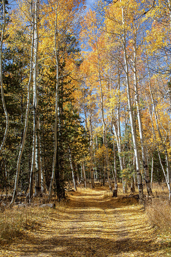 Country Road in the Fall - Vertical 2 by TL Wilson Photography by Teresa Wilson