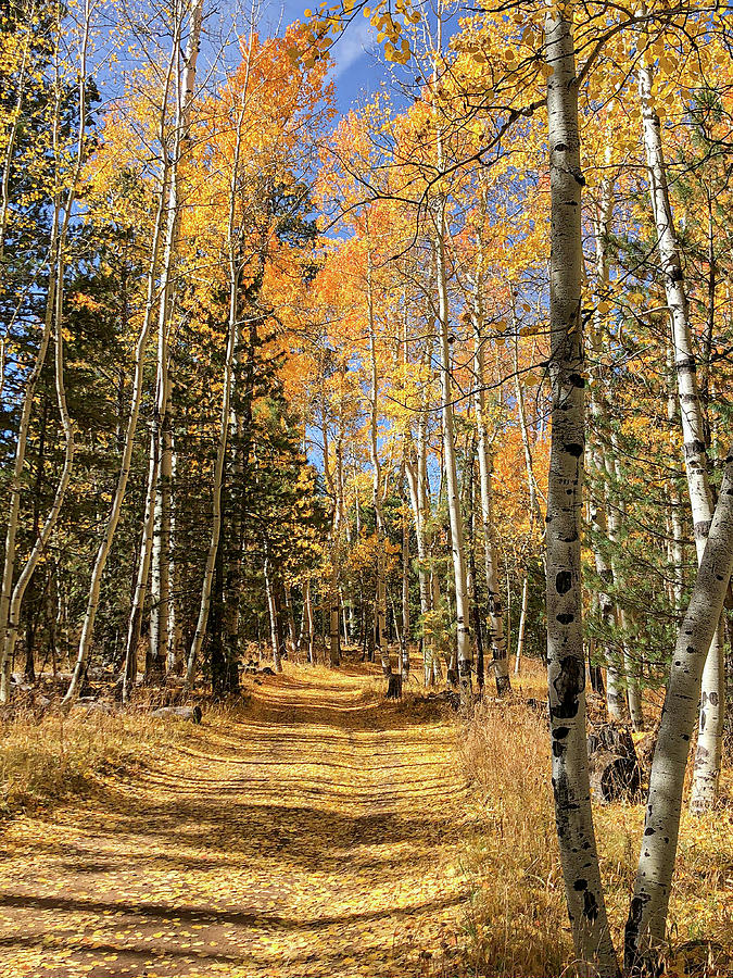 Country Road in the Fall - Vertical 3 by TL Wilson Photography by Teresa Wilson
