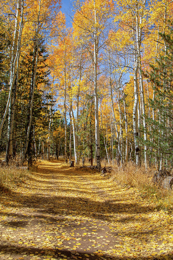 Country Road in the Fall - Vertical 4 by TL Wilson Photography by Teresa Wilson