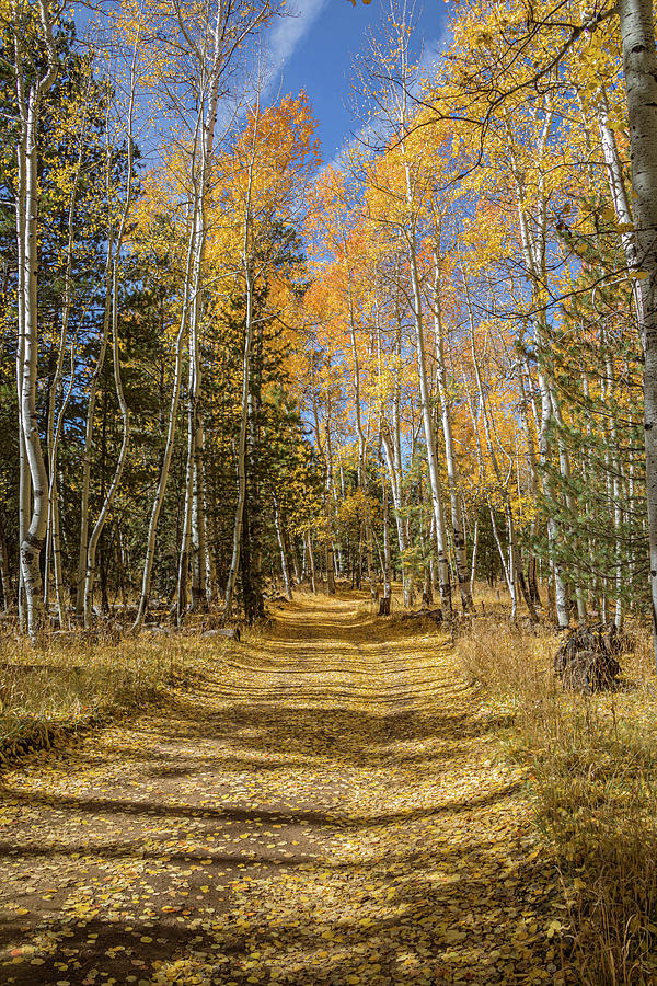 Country Road in the Fall - Vertical by TL Wilson Photography by Teresa Wilson