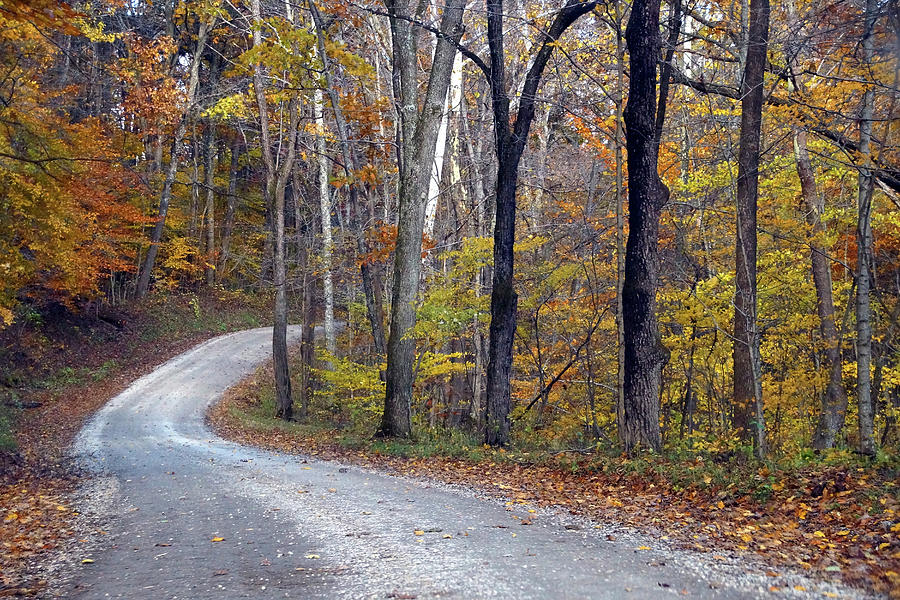 Country Road on Fall Day by Mike Murdock