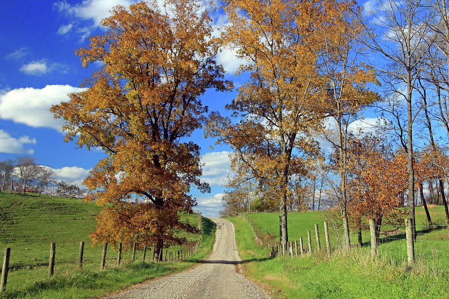 Country Road through Fall Trees by Angela Murdock