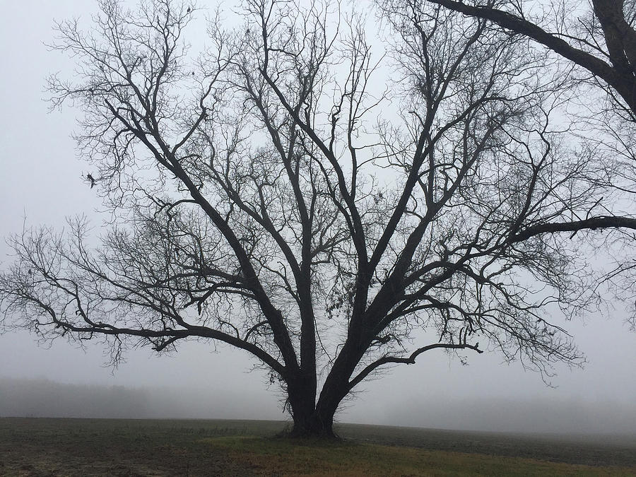 Fog Photograph - Country Silence by Matthew Seufer