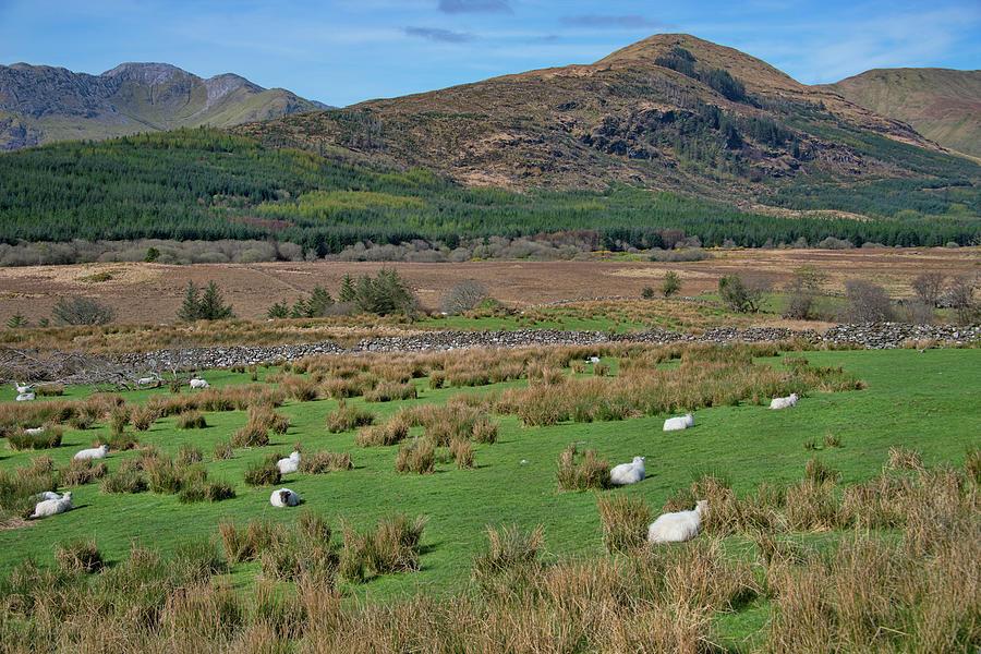 County Mayo Ireland by Curt Rush