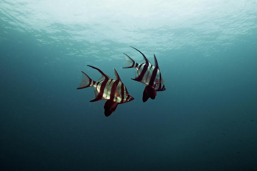 Couple Of Fish Photograph by Underwater Graphics