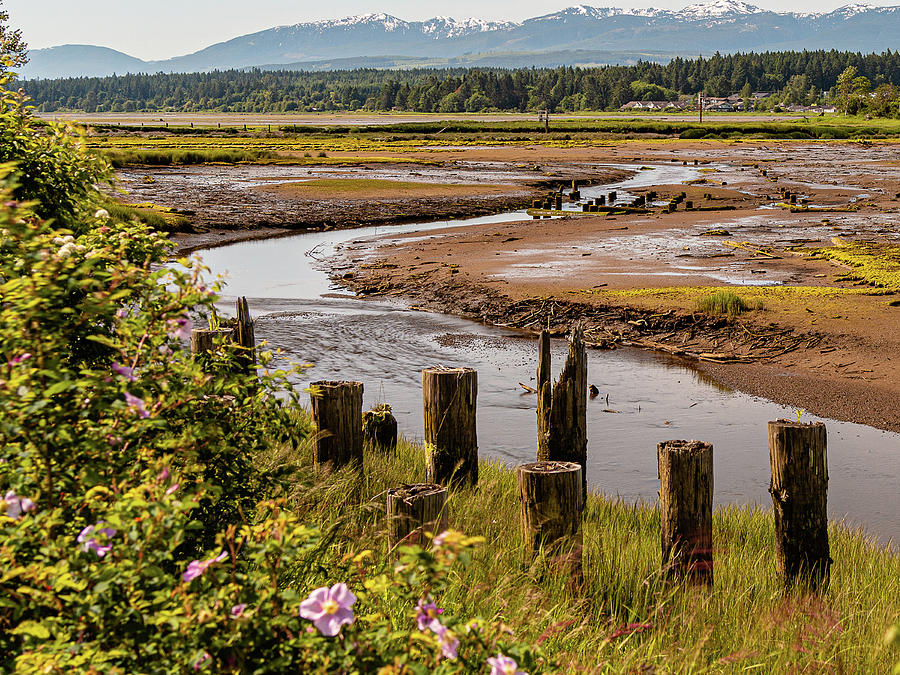 Courtenay River Estuary by Claude Dalley