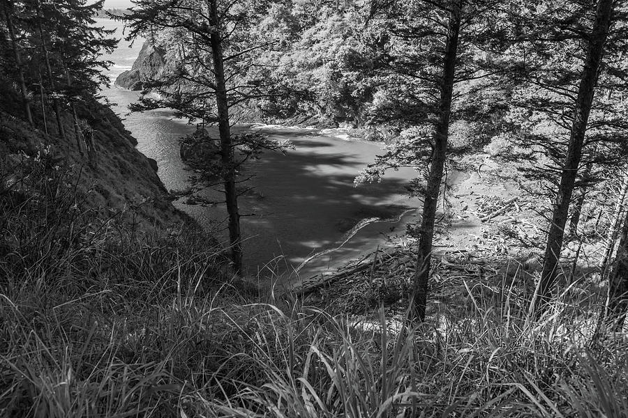 Cove by Kristopher Schoenleber