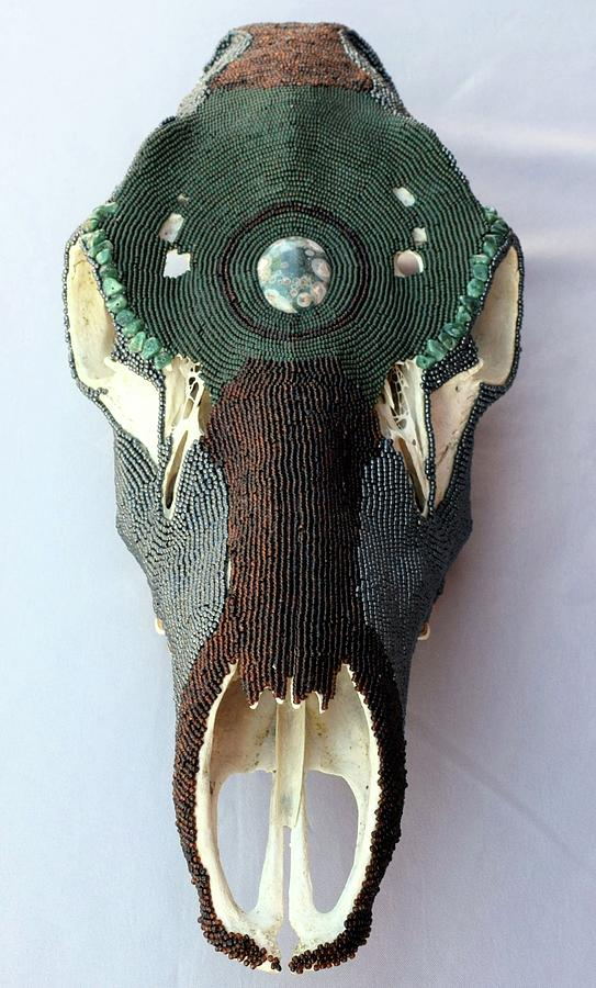 Skull Mixed Media - Cow Elk Skull by Charla Van Vlack