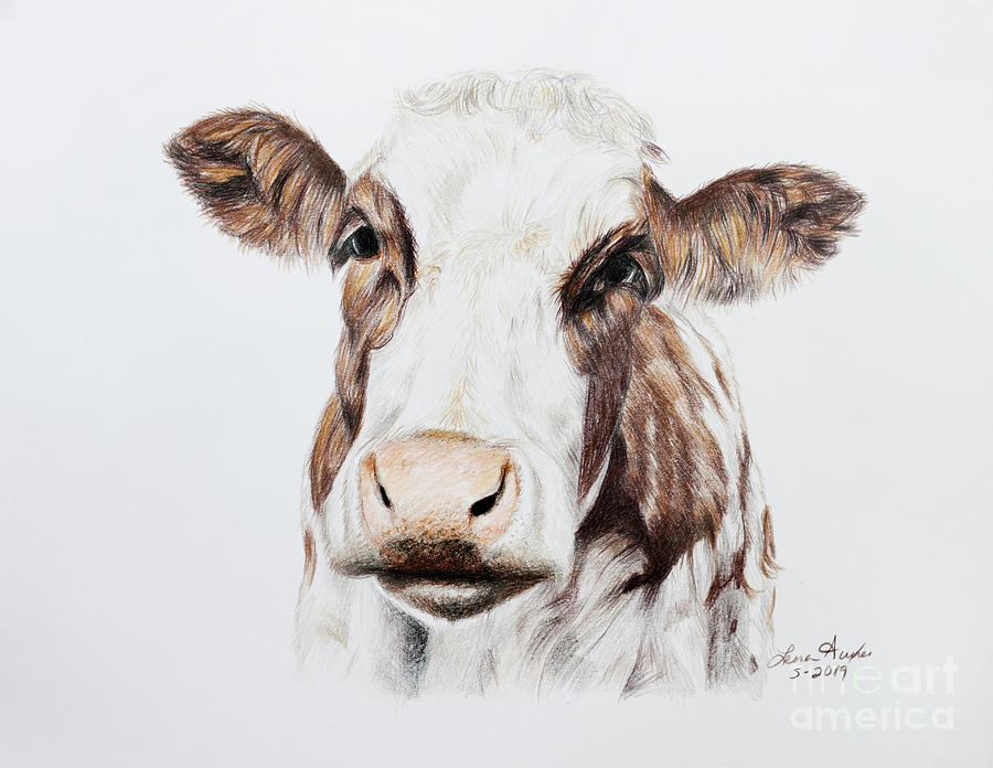 Draw Drawing - Cow by Lena Auxier