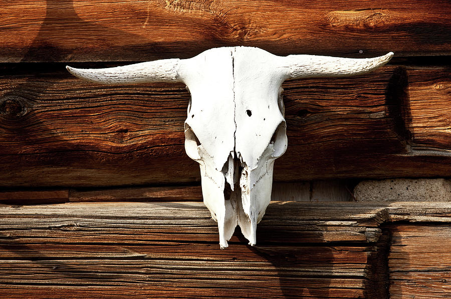Cow Skull Photograph by Imaginegolf