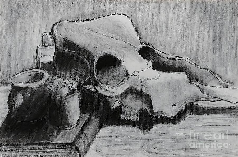 Cow Skull Still Life Study