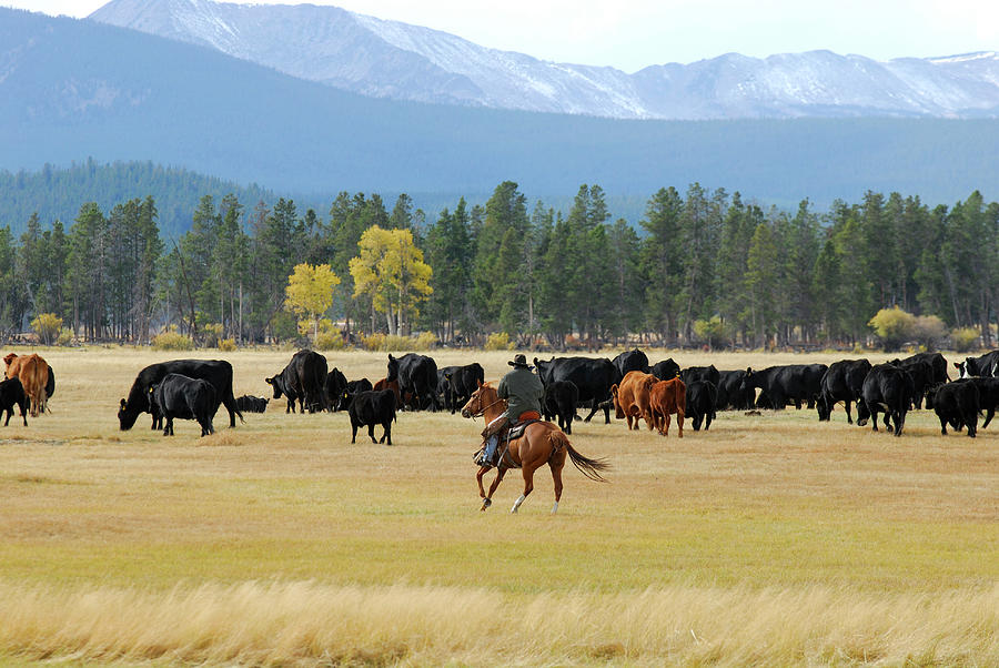 Cowboy On Horseback Photograph by Cgbaldauf