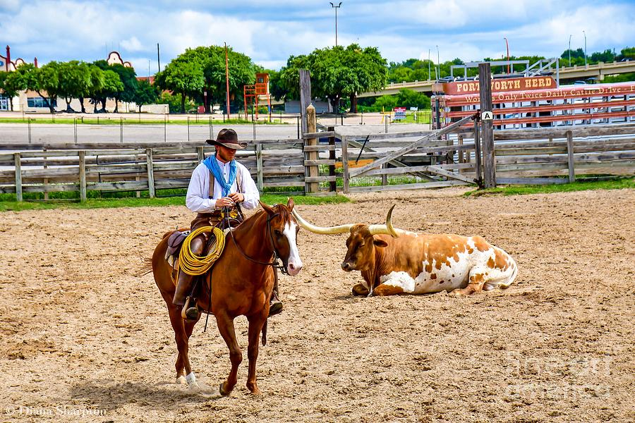 Cowboy Roundup by Diana Mary Sharpton