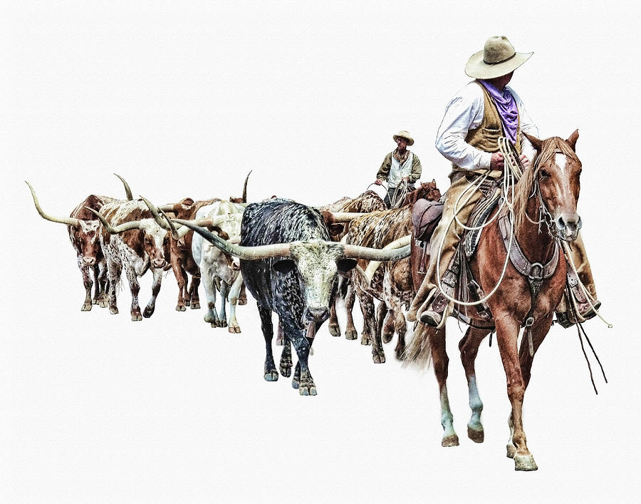 Cowboys and Longhorns by David and Carol Kelly