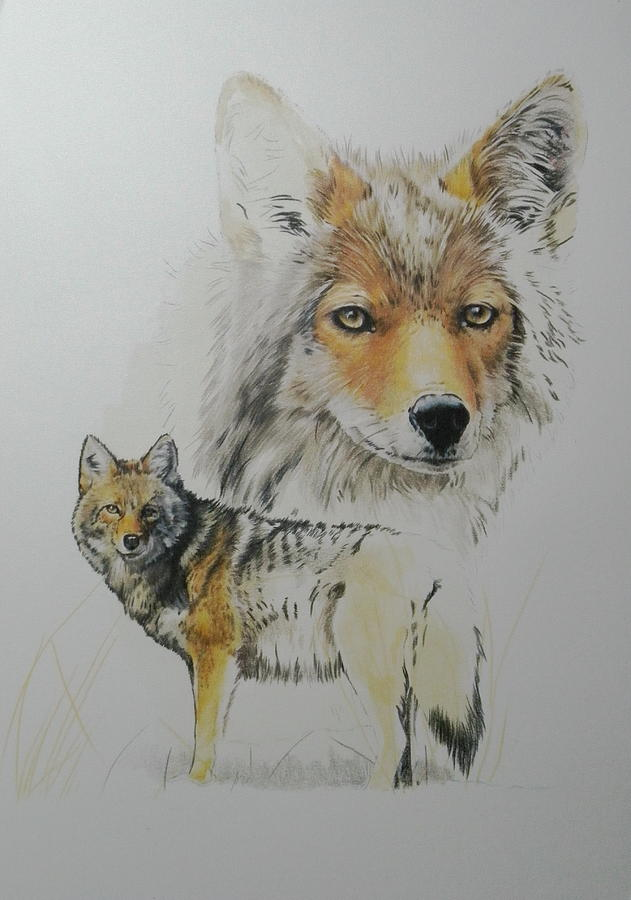 Coyote Day 5 by Barbara Keith
