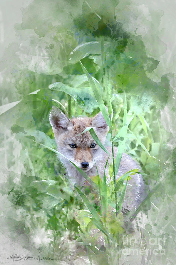 Coyote Pup by Brad Allen Fine Art