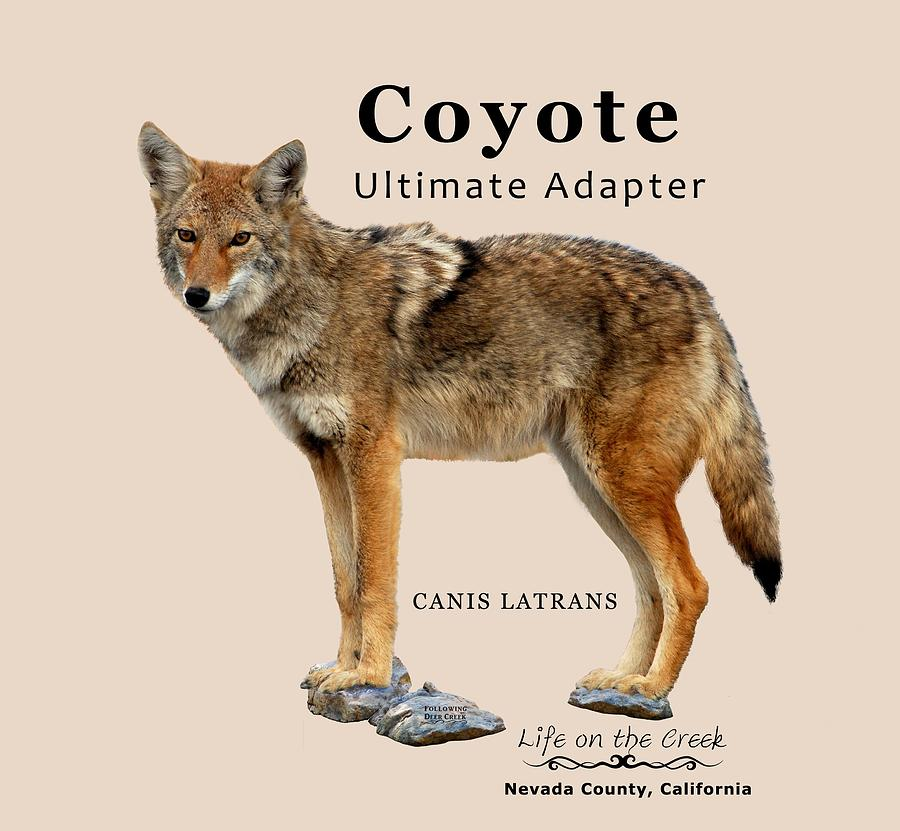 Coyote Ultimate Adaptor by Lisa Redfern
