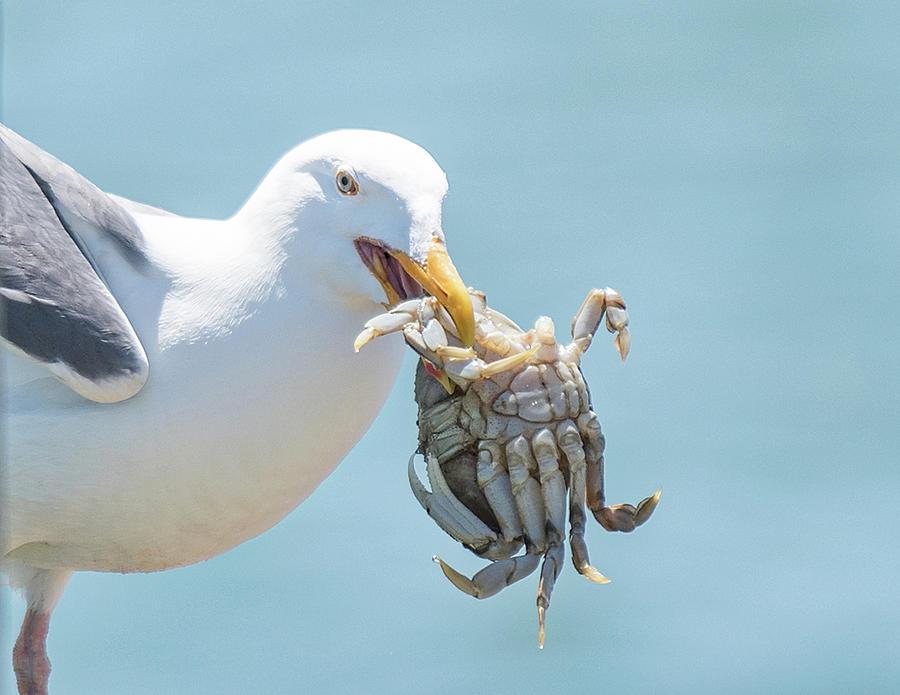 Crab Anyone? by Johanna Froese