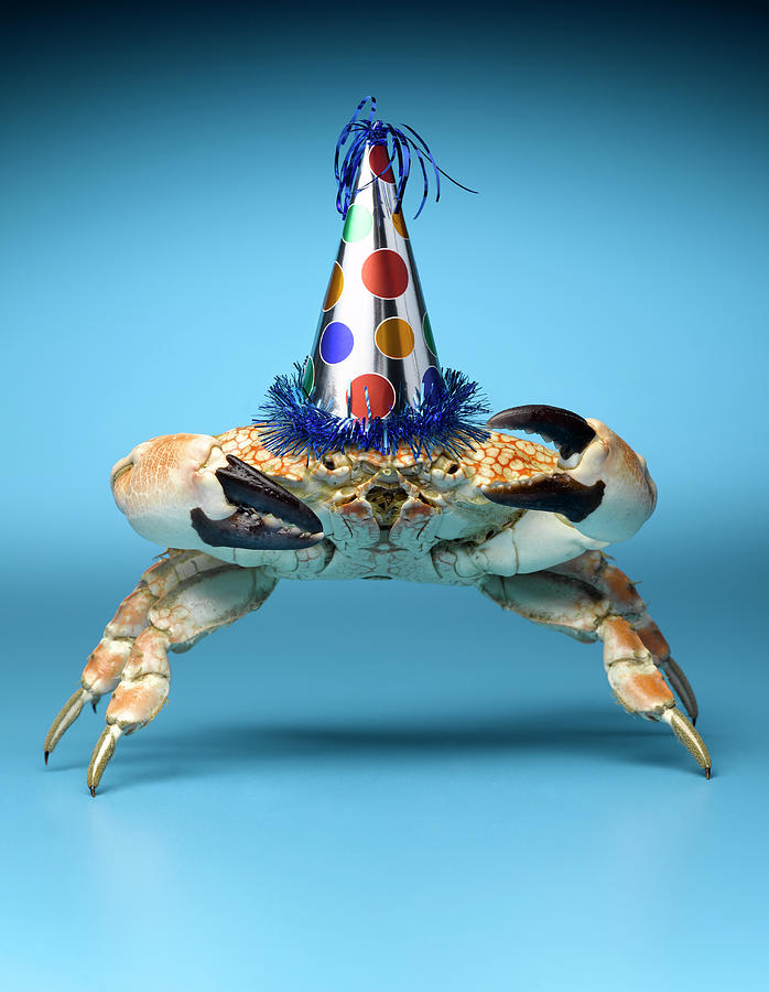 Crab Wearing Birthday Party Hat Photograph by Jeffrey Hamilton