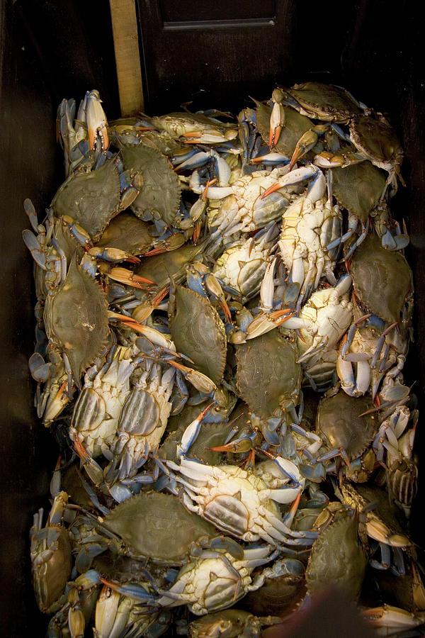 Crabs In A Box Photograph by Thepurpledoor