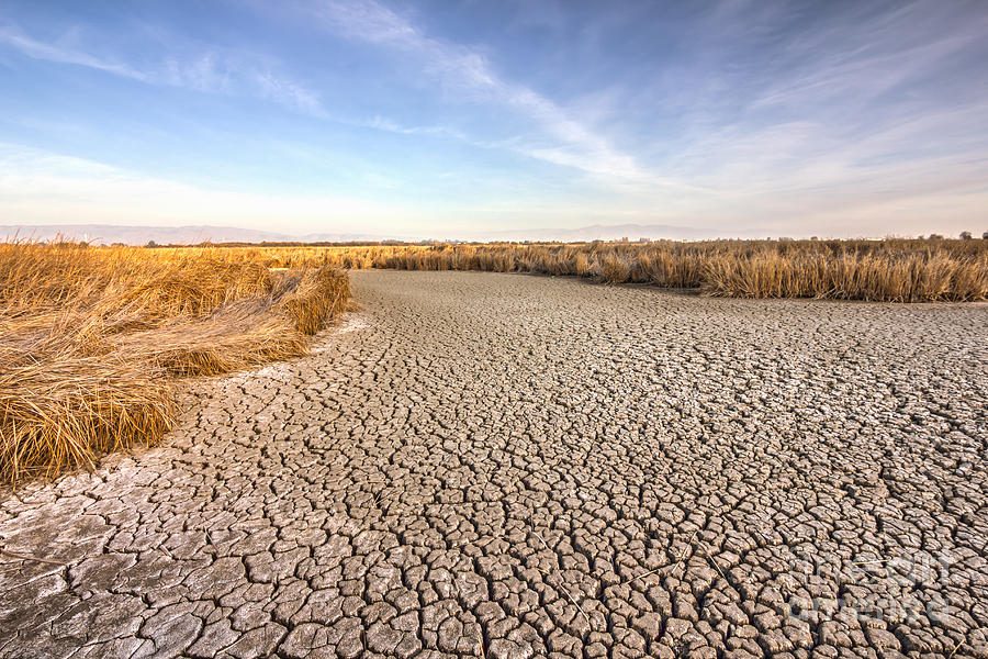 Sly Photograph - Cracked Dry Ground Near Fremont by Nvelichko