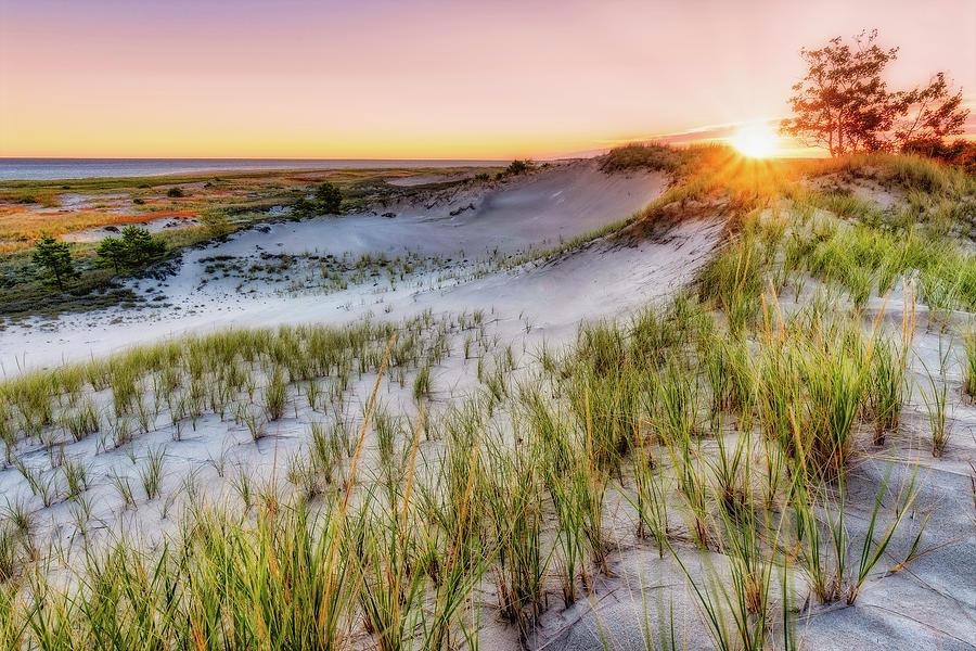 Crane Beach, Dune Grass Sunrise  by Michael Hubley