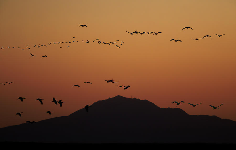 Cranes in Silouette over Mt Diablo by Lisa Malecki