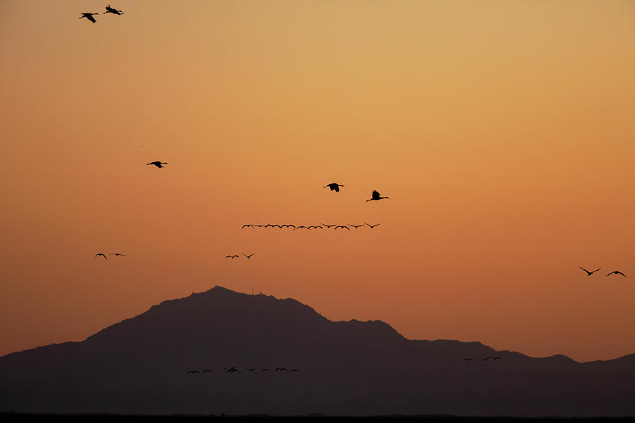 Cranes over Mt Diablo by Lisa Malecki