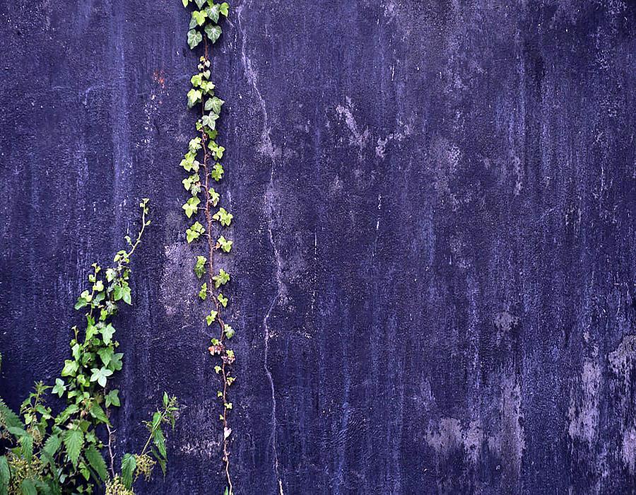 Crawling Vine by Carlene Smith