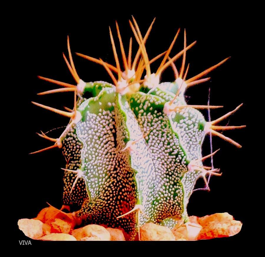 Crazy  Cactus by VIVA Anderson