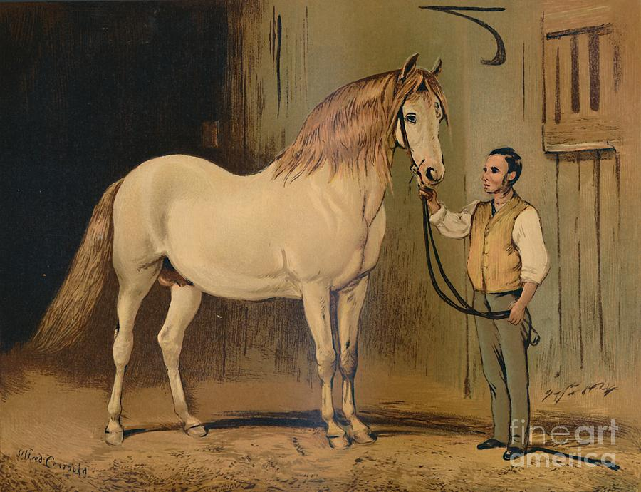 Cream State Carriage Horse Drawing by Print Collector