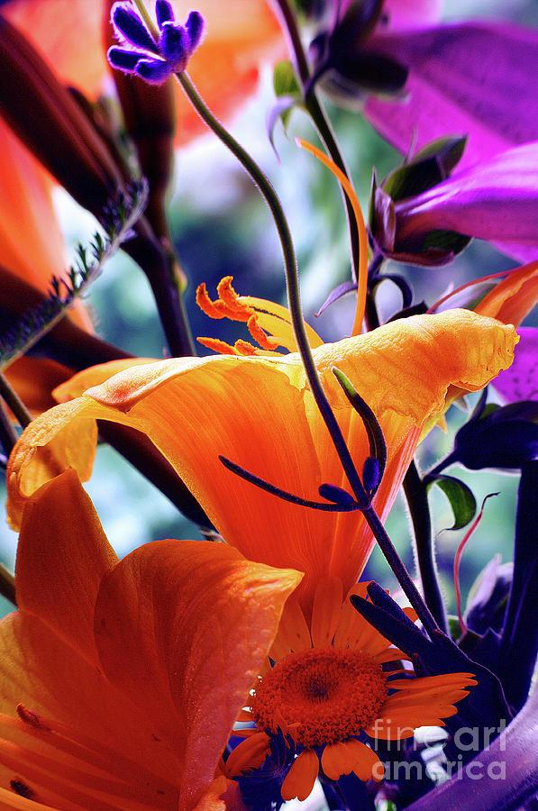 Creamsicle Gardens by Arthur Miller