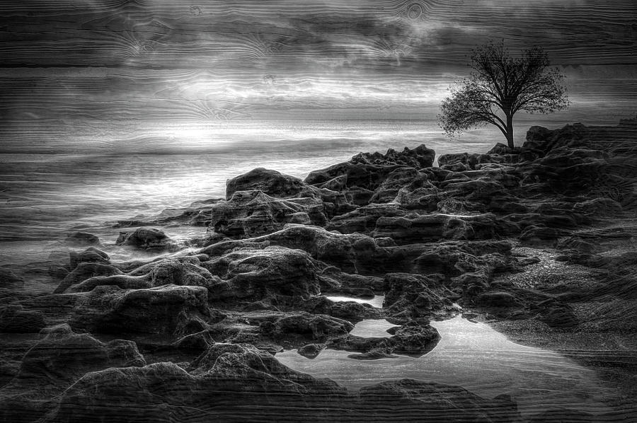 Creation in Black and White by Debra and Dave Vanderlaan